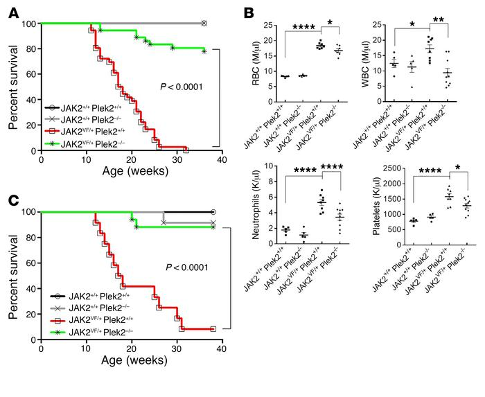 Loss of Plek2 rescues the lethality of the JAK2V617F-knockin mice. (A) K...