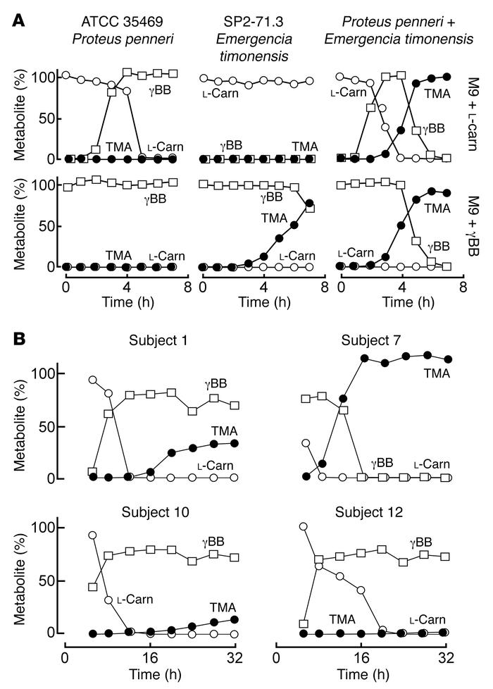 Anaerobic microbial l-carnitine catabolism generates γBB as an intermedi...