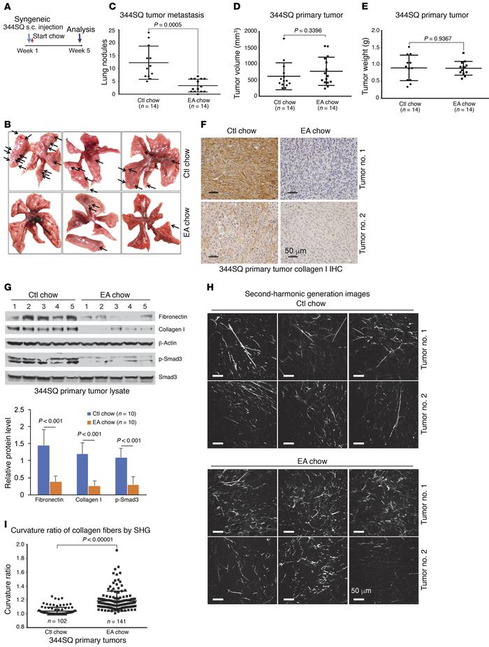 EA-rich diet attenuates 344SQ lung tumor metastasis and primary tumor co...