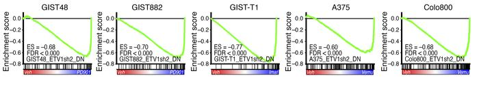 ETV1 is a downstream transcriptional effector of MAPK signaling. GSEA en...