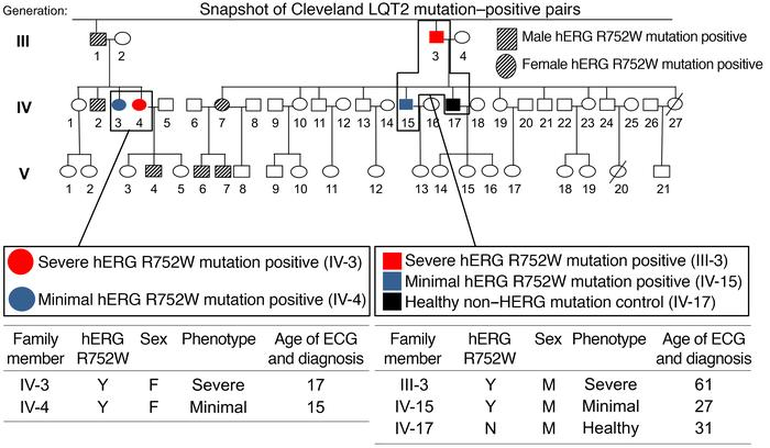 Clinical details of carrier pairs in Cleveland LQT2 family. Zoomed-in sn...