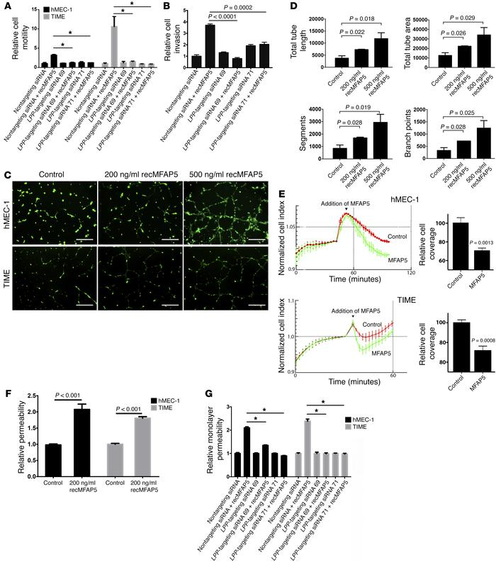 LPP mediates the effect of MFAP5 on endothelial cell motility and monola...