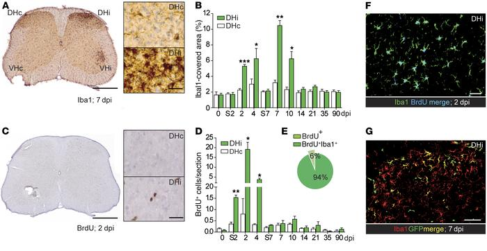 PSNL evokes reactive microgliosis and infiltration of bone marrow–derive...
