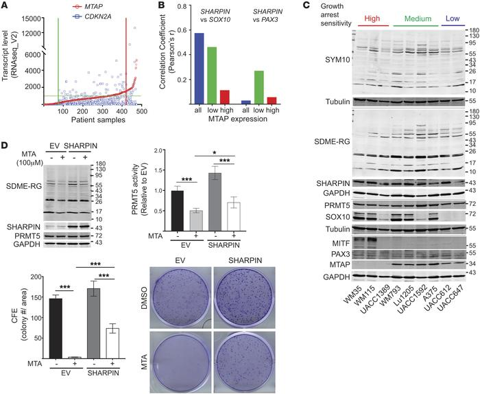 SHARPIN regulation of PRMT5 activity controls SOX10 expression and growt...