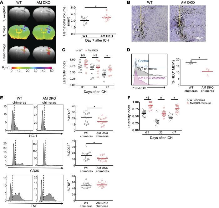 Axl/Mertk deficiency impedes ICH brain recovery and reduces macrophage ...