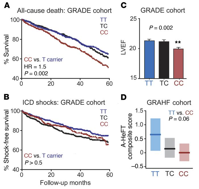 Association of rs1805126 genotype with heart failure outcomes. (A–C) Pat...