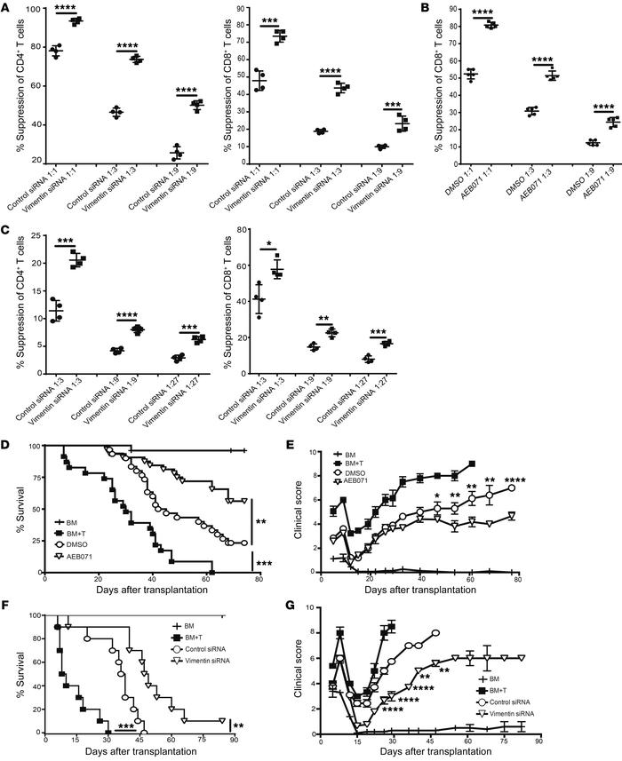 Vimentin disruption augments Treg function. (A–C) Suppression of (A) CD4...