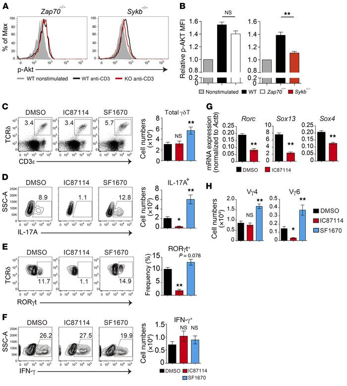 The PI3K pathway controls γδT17 development. (A and B) TCR-induced Akt p...