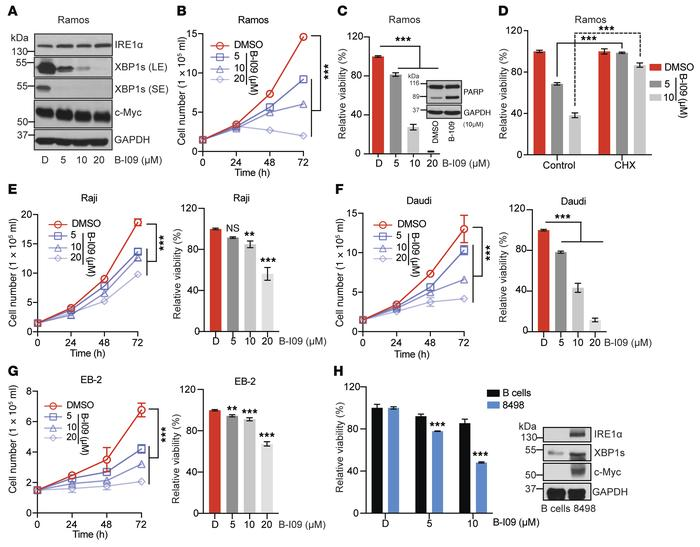 B-I09 suppresses growth and induces apoptosis in human and mouse BL cell...