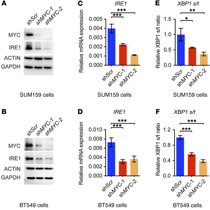 MYC is necessary for activation of the IRE1/XBP1 pathway. (A and B) Immu...