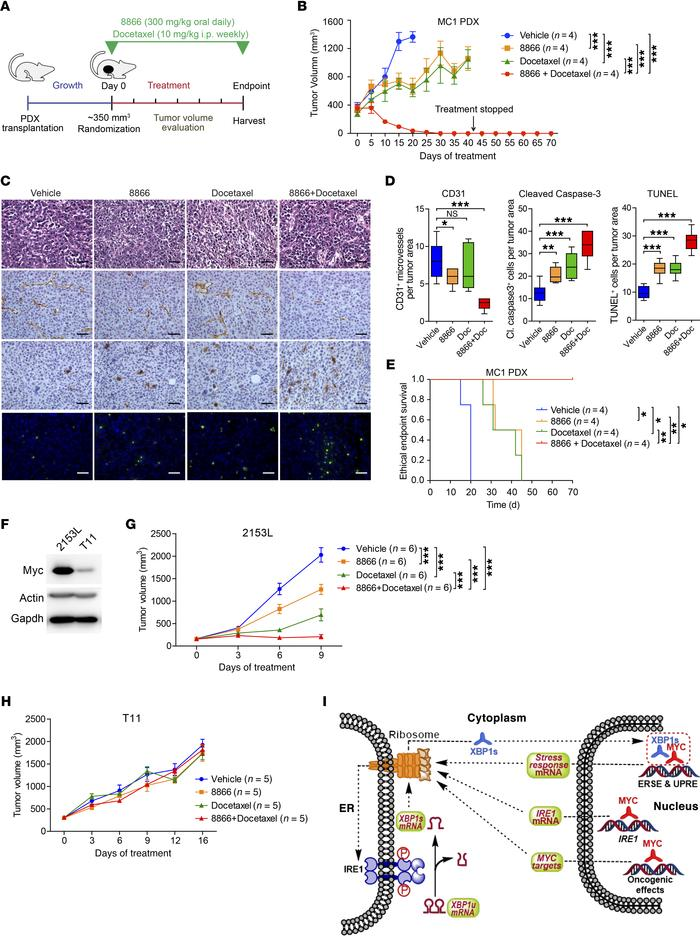 8866 enhances MYC-overexpressing PDX and GEM tumor response to docetaxel...