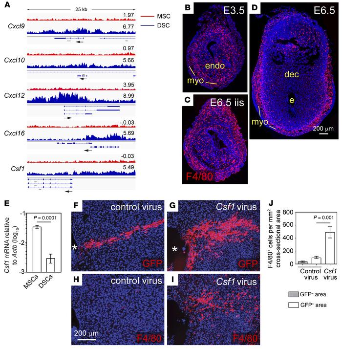 H3K27me3 accrual in DSCs attenuates type 1 immunity in the decidua. (A) ...