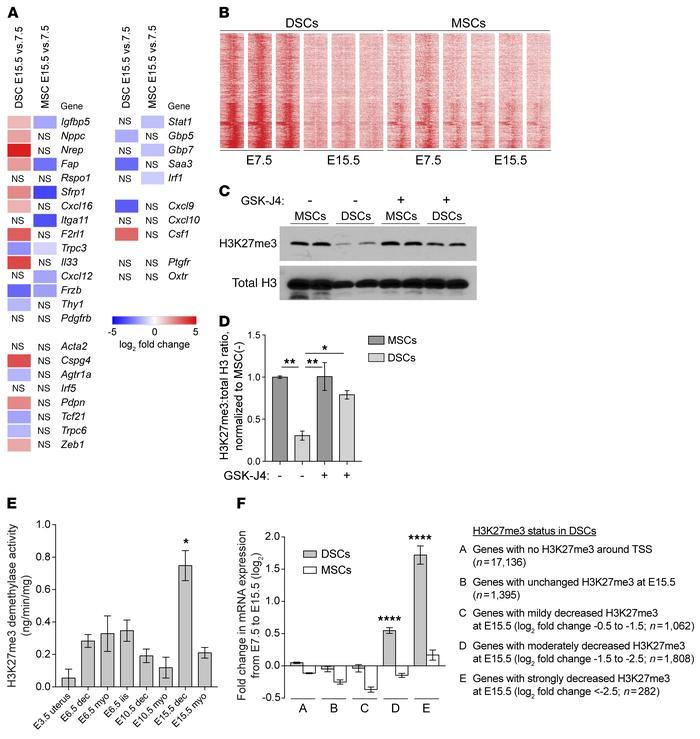 H3K27 demethylation in late-gestation DSCs, associated with gene upregul...
