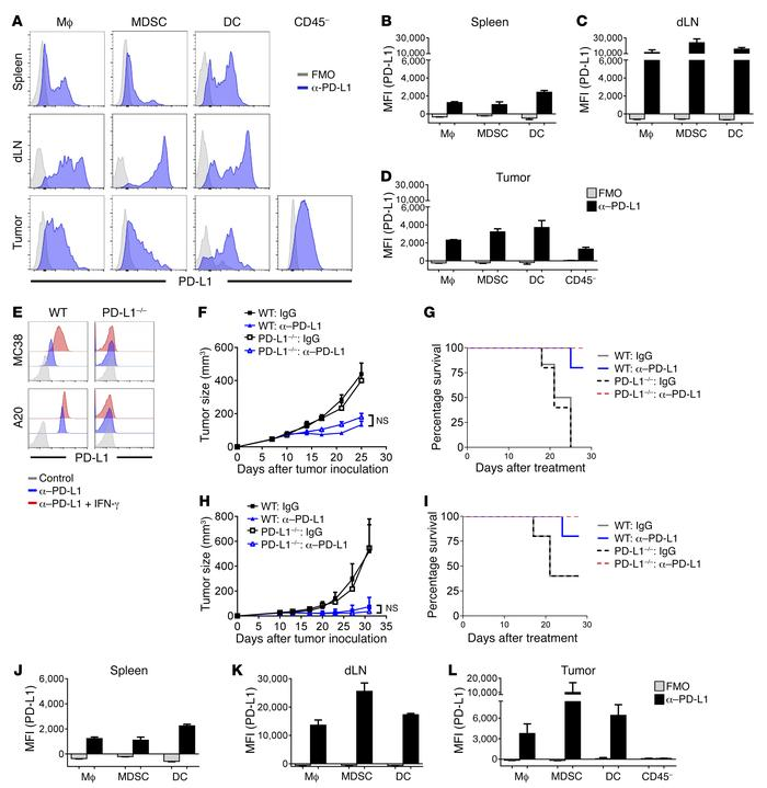 Tumor-expressed PD-L1 is dispensable for responses to checkpoint blockad...