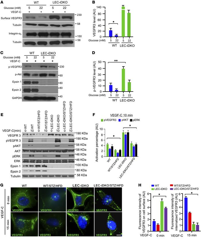Epsin deficiency limits VEGFR3 internalization and increases surface abu...