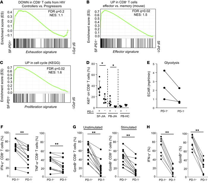PD1-expressing CD8+ T cells are effector, metabolically active, and not ...