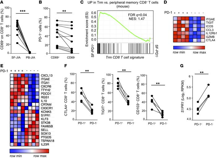 PD1-expressing CD8+ T cells display a Trm profile at the target sites of...