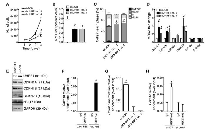 Uhrf1 regulates VSMC plasticity in vitro. (A) Proliferation curve of VS...