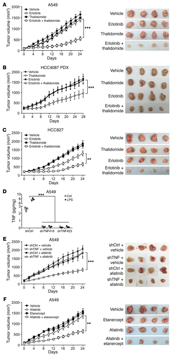 Combined inhibition of EGFR and TNF in mouse models. (A) Athymic mice we...