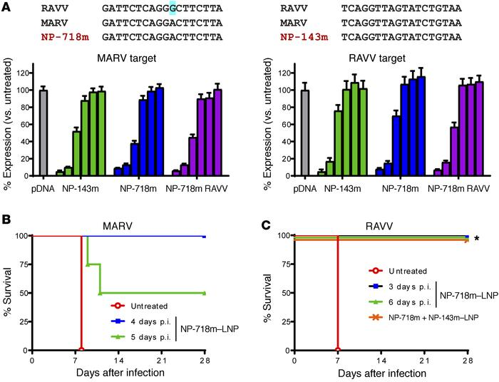 NP-718m mediates effective silencing of both MARV and RAVV and confers s...