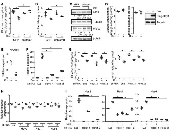 Canonical Notch signaling suppresses glycolysis. (A–C) Effects of retrov...