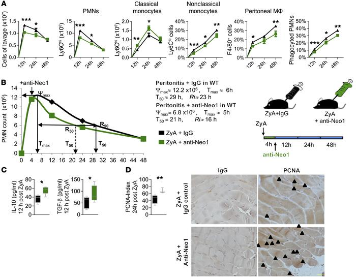 Exogenous therapeutic inhibition of Neo1 attenuates inflammation and fos...