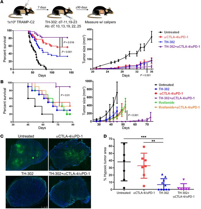Hypoxia ablation cooperates with T cell checkpoint blockade to promote r...