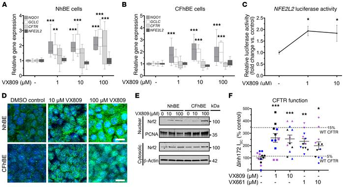 CFTR modulation dose-dependently increases Nrf2 nuclear localization and...
