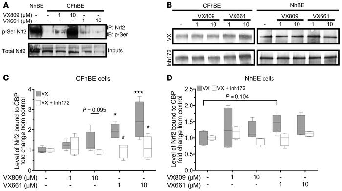 CFTR modulation increases Nrf2 phosphorylation and interaction with CBP....