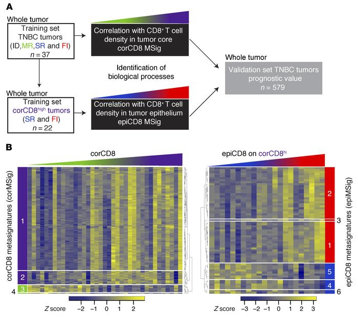 CD8+ T cell localization–derived metasignature methodology. (A) Analysis...