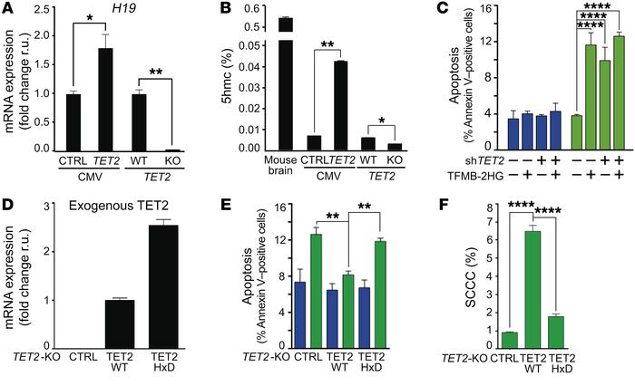 SCCC survival depends on TET2 enzymatic activity. (A) Expression of H19 ...