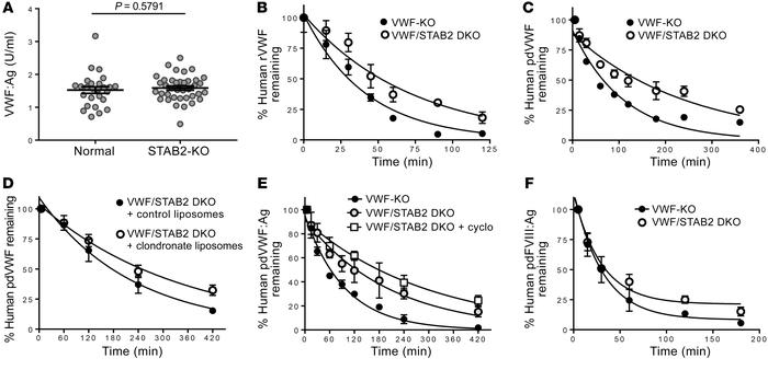 Stabilin-2 deficiency increases the half-life of human VWF-FVIII. (A) Pl...