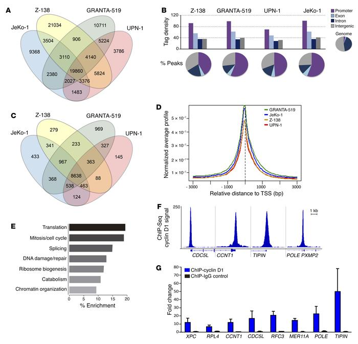 Cyclin D1 binds genome-wide in MCL cell lines. (A) Venn diagram represen...
