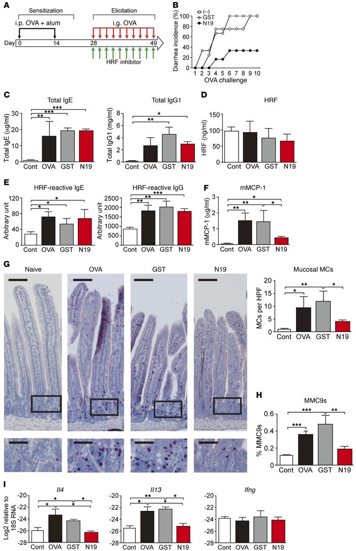 GST-N19 inhibits the development of diarrhea and intestinal mastocytosis...