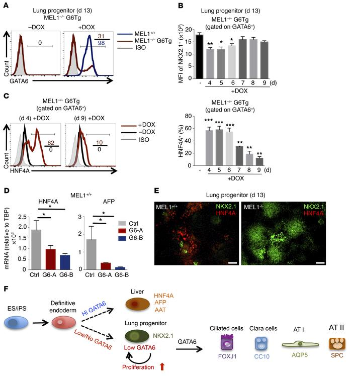 Reexpression of GATA6 during anteriorization induces liver development. ...