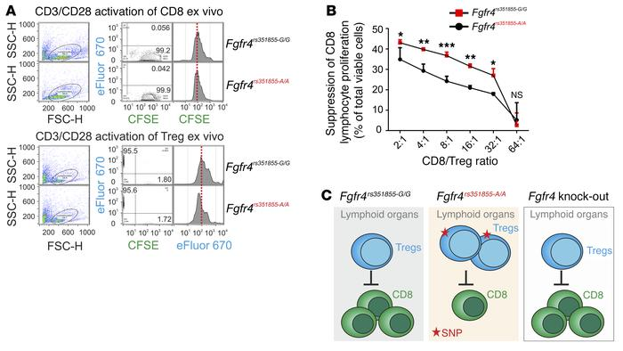 Genotype-specific suppression of the CD8/Treg ratio ex vivo. (A) Dye dil...