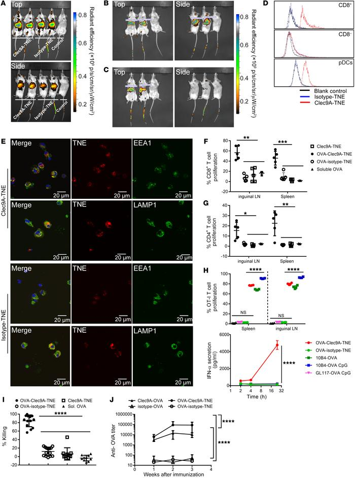 OVA-Clec9A-TNE targets cross-presenting DCs and promotes antigen-specifi...