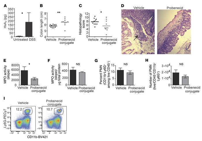 HxA3 drives inflammation during DSS colitis. (A) Mucosal scrapings from ...