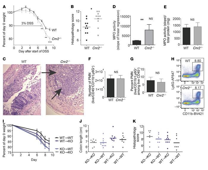 CB2-deficient mice are vulnerable to severe intestinal inflammation with...