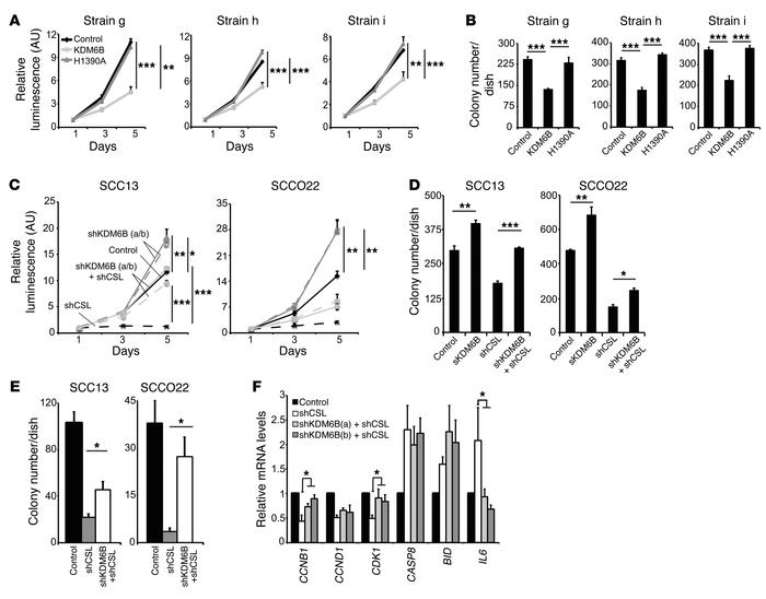 KDM6B as a downstream CSL target counteracting its growth-enhancing modu...