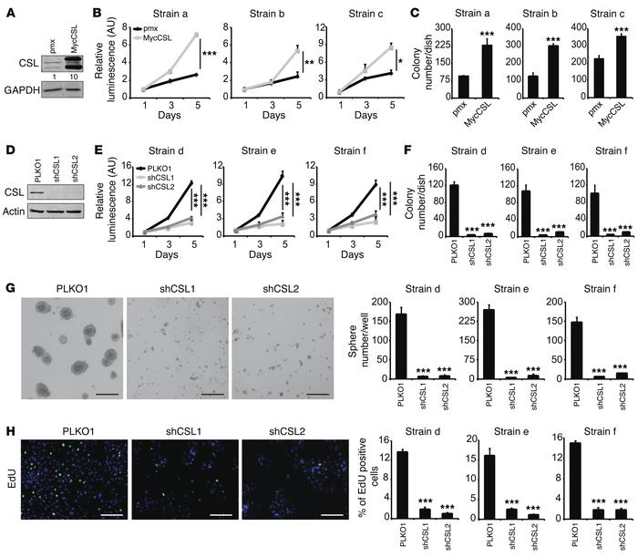 Positive role of CSL in promoting keratinocyte proliferative potential a...