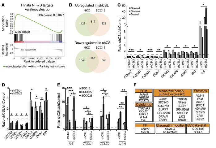 RNA-seq analysis of normal HKCs and SCC cells upon CSL silencing. (A) Re...