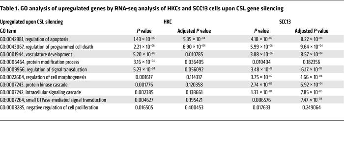 GO analysis of upregulated genes by RNA-seq analysis of HKCs and SCC13 c...