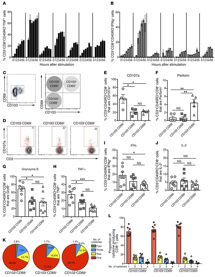 Functional profiles of memory CD8+ T cells in human lung tissue. Proport...