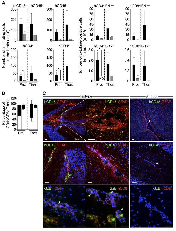 Effect of α4 integrin blockade on the clinical and immunological paramet...