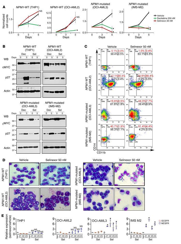 JCI - Leukemogenic nucleophosmin mutation disrupts the