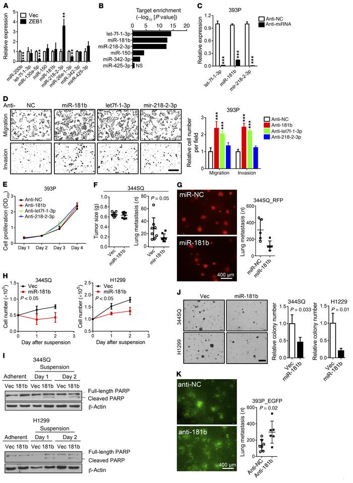 miRs not repressed by ZEB1 have metastasis suppressor activity. (A) Quan...