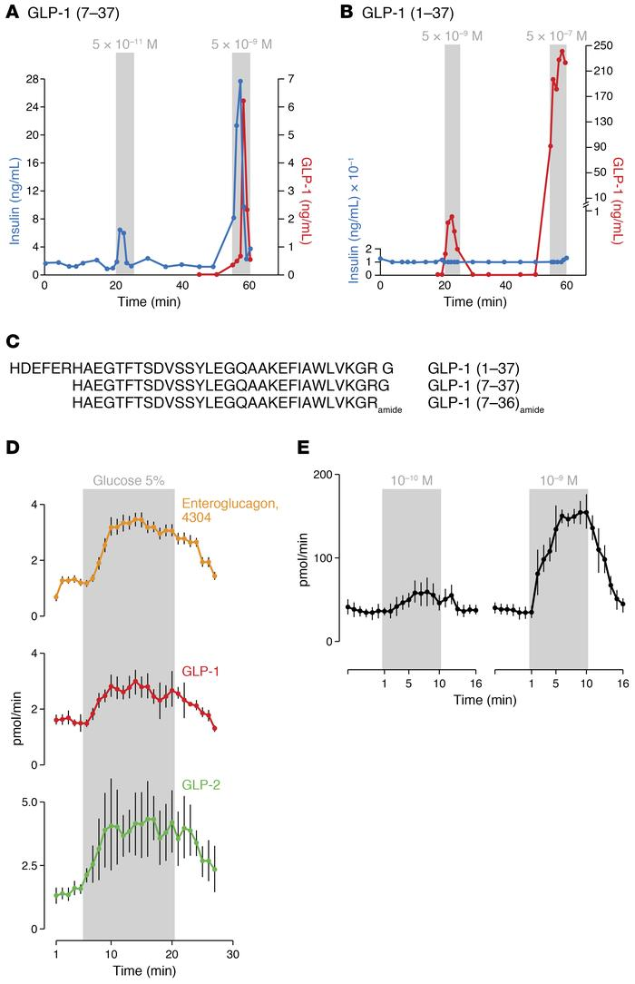 Truncated forms of GLP-1 stimulate glucose-dependent insulin secretion. ...