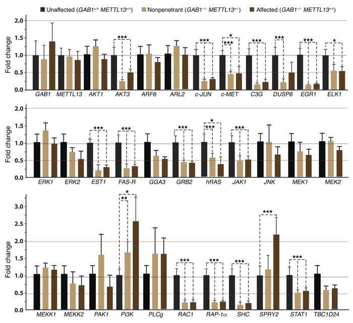 MET–signaling pathway genes are dysregulated in the lymphoblastoid cell ...