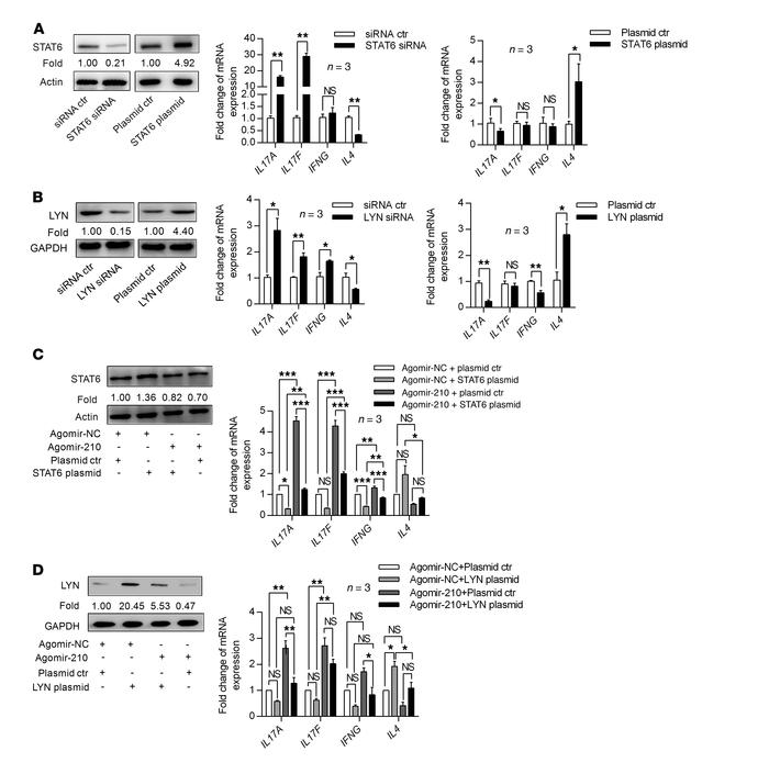 STAT6 and LYN are required for miR-210–induced effects. (A and B) Normal...